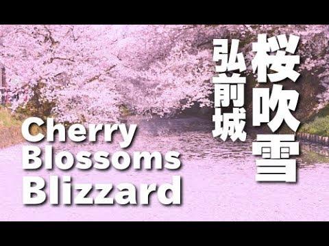Sakura 桜吹雪の弘前公園 Cherry Blossom blizzard of Hirosaki Park JAPAN 青森観光 花見 桜の名所 日本の桜 日本櫻花 樱花