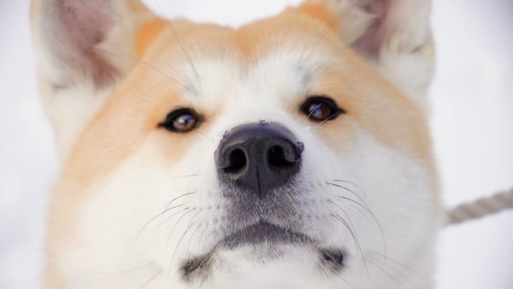 """Dog View"" from Akita-inu, home of Japan's adorable Akita dogs / 秋田犬がふるさとをストリートビュー"