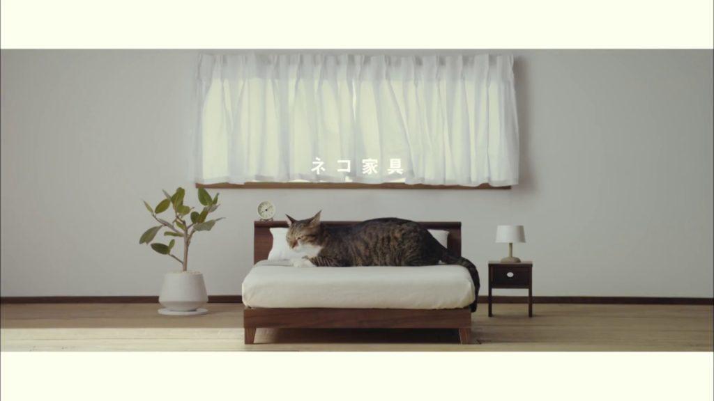 第1弾【ネコ家具できました】篇  We made cat furniture.