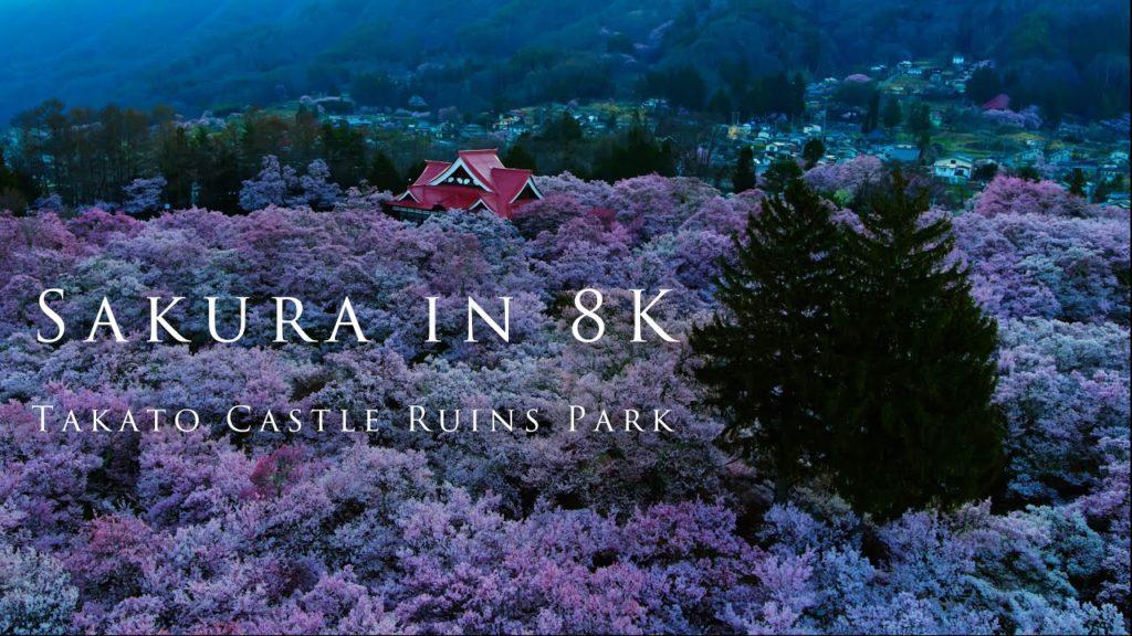 Sakura in 8K- Takato Castle Ruins Park/天下第一の桜 〜高遠城址公園〜