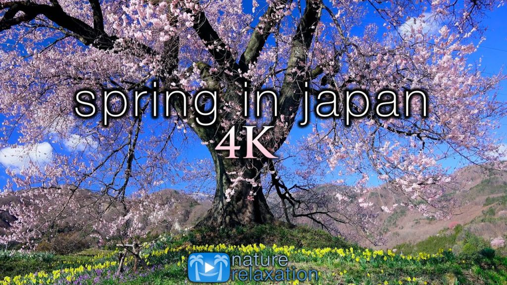 SPRING IN JAPAN 4K Ambient Aerial Nature Film + Piano Relaxation Music – Cherry Blossoms UHD